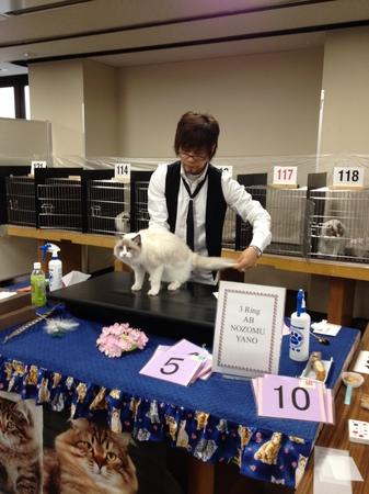 3月10日キャットショー 040.JPG